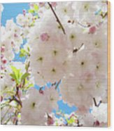 Fluffy White Pink Sunlit Tree Blossom Art Print Canvas Baslee Troutman Wood Print