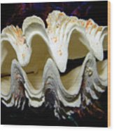Fluted Giant Clam Shell Wood Print
