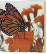 Flutterby Wood Print