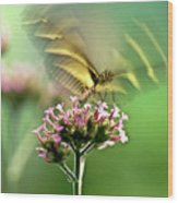 Fluttering Butterfly Wood Print by Heiko Koehrer-Wagner