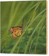 Fluttering Through The Summer Grass Wood Print