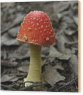 Fly Agaric Mushroom Wood Print