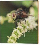 Fly Beauty Wood Print
