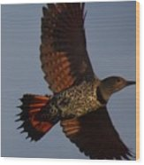 Fly Flicker Fly Wood Print