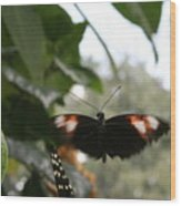 Fly Free - Black, Orange, White Butterfly Wood Print