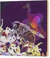 Fly Housefly Insect Close Macro  Wood Print