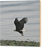 Fly Like An Eagle Wood Print