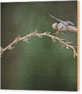 Fly Little Dragonfly Wood Print