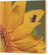 Fly On Sunflower Wood Print