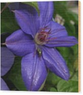 Fly On The Clematis Wood Print