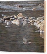 Flycatcher Hunting On The Buffalo River Wood Print