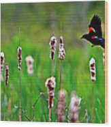 Flying Amongst Cattails Wood Print