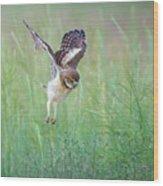 Flying Baby Burrowing Owl Wood Print