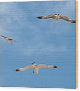 Flying By Wood Print
