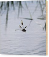 Flying Dragonfly Over Pond With Reeds Wood Print