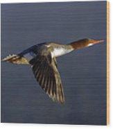 Flying Female Merganser - Odell Lake Oregon Wood Print