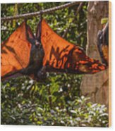 Flying Foxes Wood Print