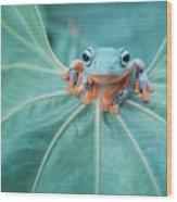 Flying Frog Wallace Wood Print