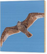 Flying Gull Wood Print