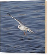 Flying Gull Wood Print by Michal Boubin