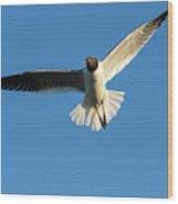 Flying Gull Wood Print