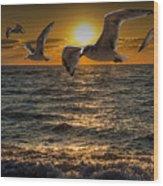 Flying Gulls At Sunset Wood Print