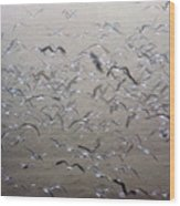 Flying Gulls Wood Print
