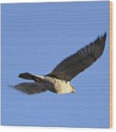 Flying Hawk II Wood Print