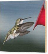 Flying Hummingbird Close-up Wood Print