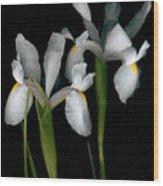 Flying Irises 2 Wood Print
