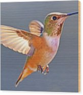 Flying Jewel Wood Print