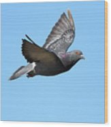 Flying Pigeon . 7d8640 Wood Print