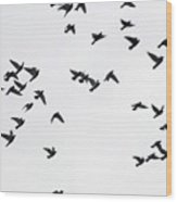 Flying Pigeons Wood Print