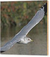 Flying Sea Gull - Eugene Oregon Wood Print