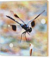 Flying Sparkler Wood Print