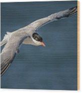 Flying Tern  4691 Wood Print