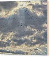Flying Through Sun Rays Wood Print