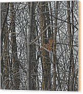 Flying Through The Trees Of The Forest Wood Print