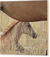 Foal And Mare In A Saskatchewan Pasture Wood Print