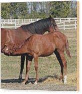 Foal Feeding With Milk Ranch Scene Wood Print