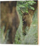 Foals Wood Print