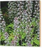 Foam Flower Tiarella Cordifolia Wood Print