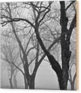 Fog 1 Wood Print by Beverly Hammond