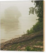 Fog Along The Red Wood Print by Steve Augustin