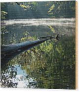Fog And Reflection Of Stream Wood Print