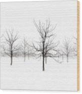Fog And Winter Black Walnut Trees  Wood Print