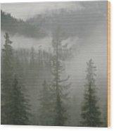 Fog Hangs In A Valley Of Evergreens Wood Print