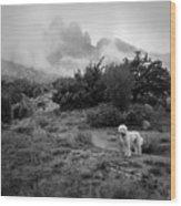 Fog In The Organ Mountains Wood Print