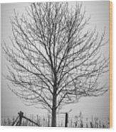 Foggy Lone Tree Hill Fine Art Wood Print