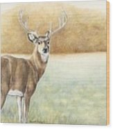Foggy Morning Buck Wood Print